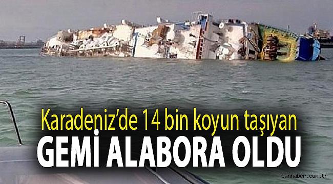 Karadeniz'de 14 bin koyun taşıyan gemi alabora oldu