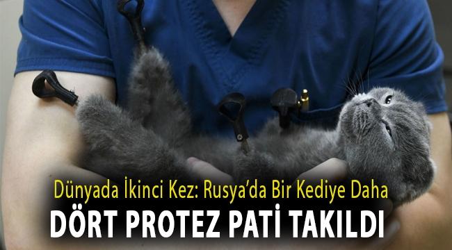 Dünyada ikinci kez: Rusya'da bir kediye daha dört protez pati takıldı