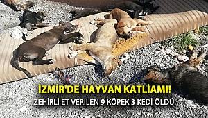 İzmir'de Hayvan Katliamı! Zehirli Et Verilen 9 Köpek ve 3 Kedi Öldü