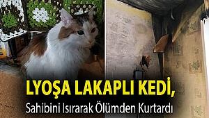 Lyoşa lakaplı kedi, sahibini ısırarak ölümden kurtardı