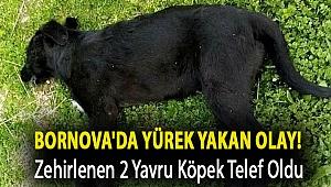 Bornova'da yürek yakan olay! Zehirlenen 2 yavru köpek telef oldu