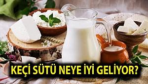 Keçi sütünün faydaları nelerdir? Keçi sütü neye iyi geliyor?