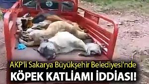 AKP'li Sakarya Büyükşehir Belediyesi'nde köpek katliamı iddiası!