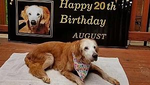 Dünyanın en yaşlı Golden Retriever cinsi köpeği 20 yaşına bastı