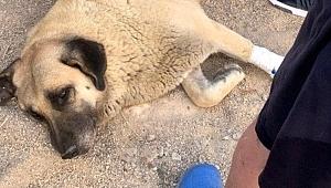 Kuşadası'nda akılalmaz olay! Sokaktaki köpeği bıçakladı