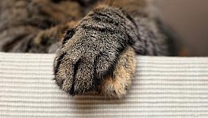 Evcil hayvanınızın sağlak mı yoksa solak mı olduğunu öğrenmenin yolları
