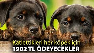 Katlettikleri her köpek için 1902 TL ödeyecekler