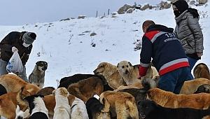 Ankara'da ortak akıl sokak hayvanları için de devrede