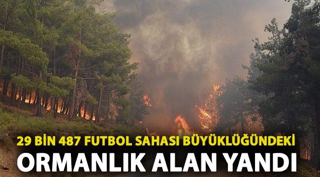 2020 yılında 29 bin 487 futbol sahası büyüklüğündeki ormanlık alan yandı