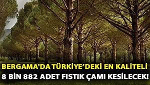 Bergama'da Türkiye'deki en kaliteli 8 bin 882 adet fıstık çamı kesilecek!