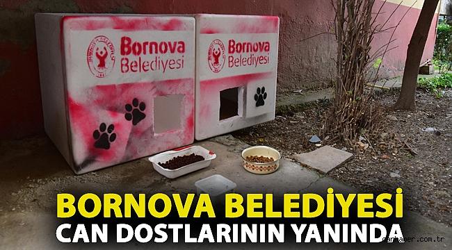 Bornova Belediyesi can dostlarının yanında