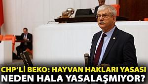 CHP'li Beko: Hayvan Hakları Yasası neden hala yasalaşmıyor?
