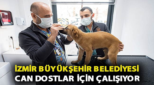 İzmir Büyükşehir Belediyesi can dostlar için çalışıyor