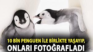 Antarktika'da geçirilen iki kış: Alman fotoğrafçı 10 bin penguen ile birlikte yaşayıp, onları fotoğrafladı