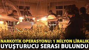 Avcılar'da narkotik operasyonu: 1 Milyon liralık uyuşturucu serası bulundu