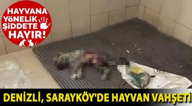 Denizli, Sarayköy'de hayvan vahşeti: Hayvanlar çürümeye terk edilmiş