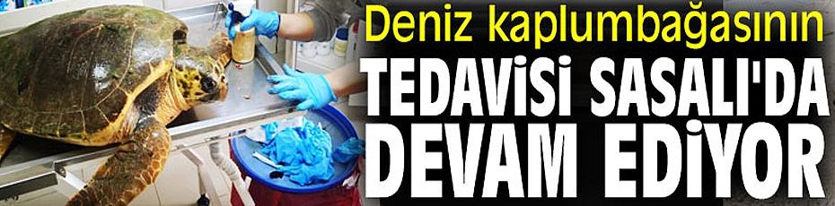 İzmir'de deniz kaplumbağasının tedavisi Sasalı'da devam ediyor
