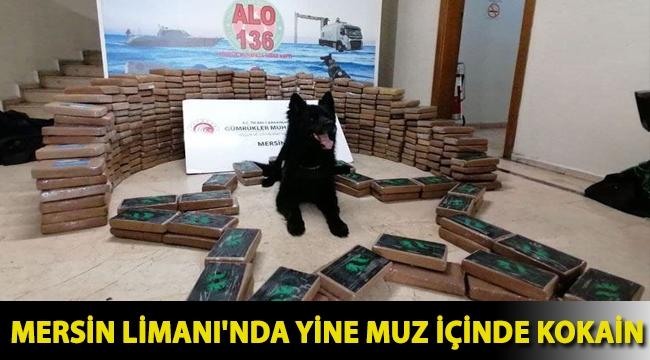 Mersin Limanı'nda yine muz içinde kokain