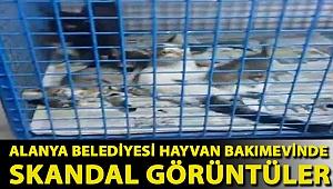 Alanya Belediyesi Hayvan Bakımevinde Skandal Görüntüler