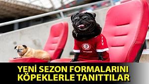 Championship ekibi Bristol City, yeni sezon formalarını köpeklerle tanıttı