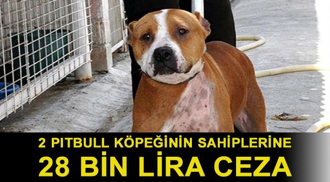 Van'da sokak köpeğine saldıran 2 pitbull köpeğinin sahiplerine 28 bin lira ceza